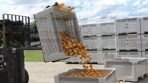 Behälter-Kipper, der Orange spitzt